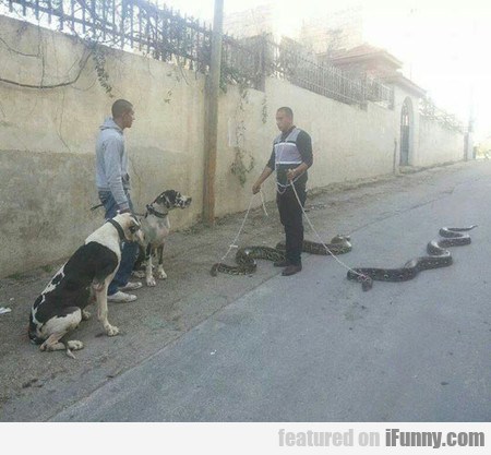 Just Taking Them For A Slither In The Park