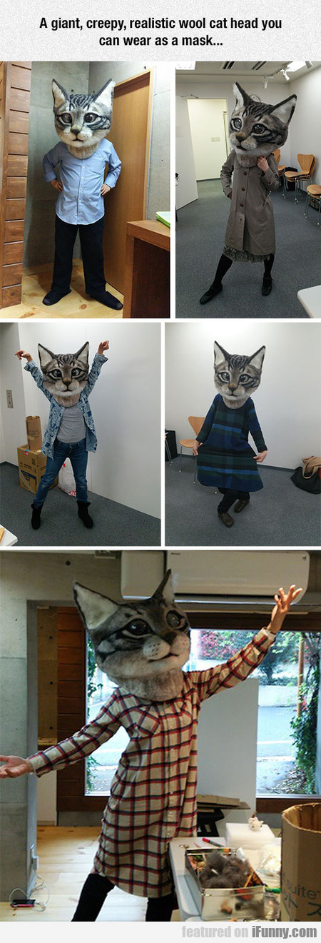 How To Confuse And Terrify Your Cat