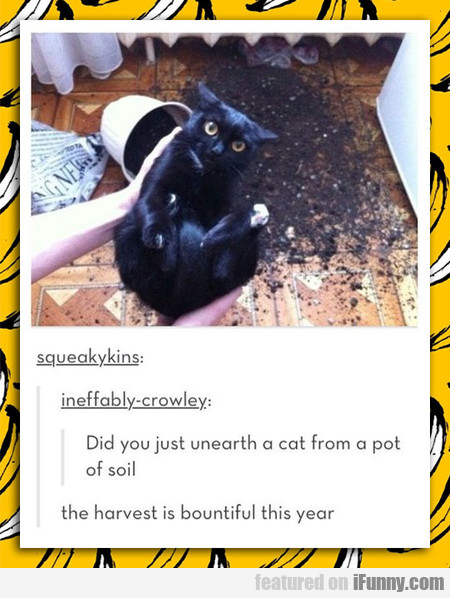 Harvesting Cats