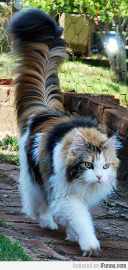The Tail Of This Cat Is My Spirit Animal