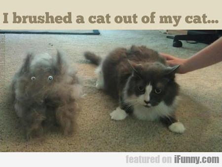 The Thing About Hairy Cats