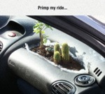 That Feeling Of Nature Inside Your Car