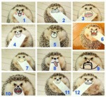 The Many Faces Of A Tiny Hedgehog