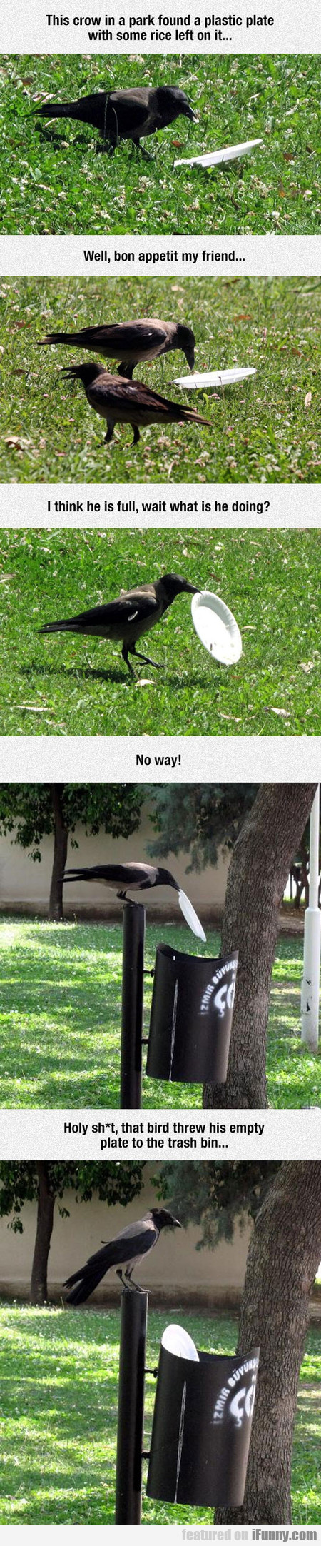 This Crow Is Better Than Most People
