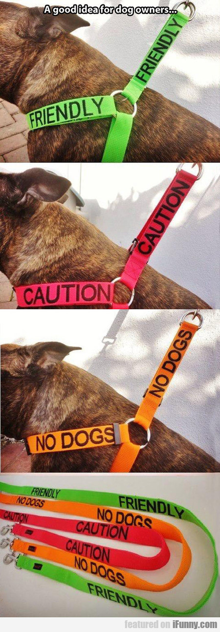 A Very Good Idea For Dog Owners