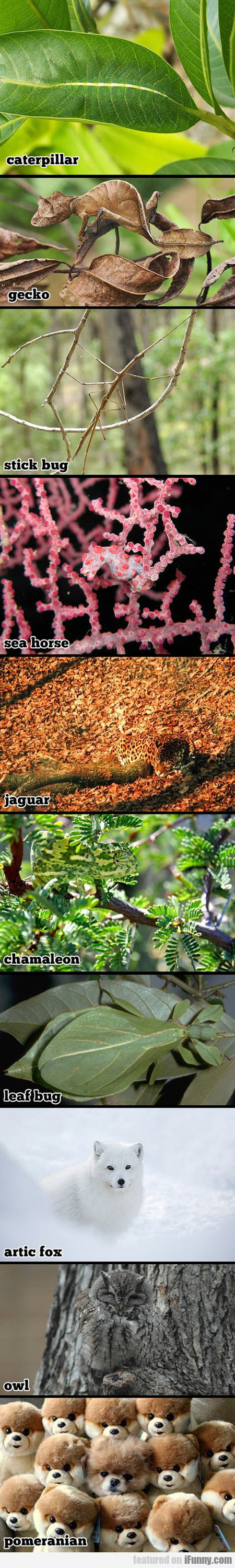 Camouflaged Animals, Can You See Them?