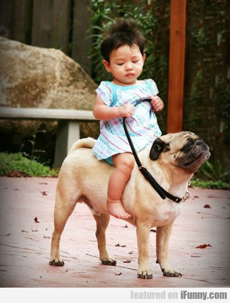 The Pug Rider, This Pug Looks So Proud