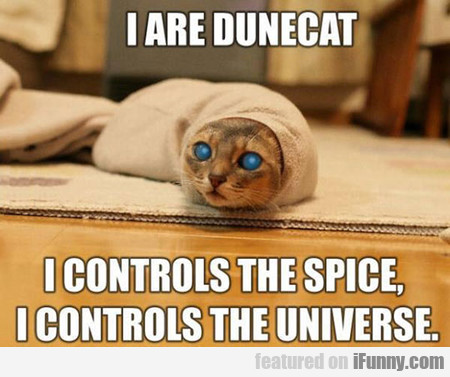 Dune Cat Is Here