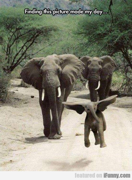 Dumbo Is Real