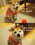 Don't Mess With Doge