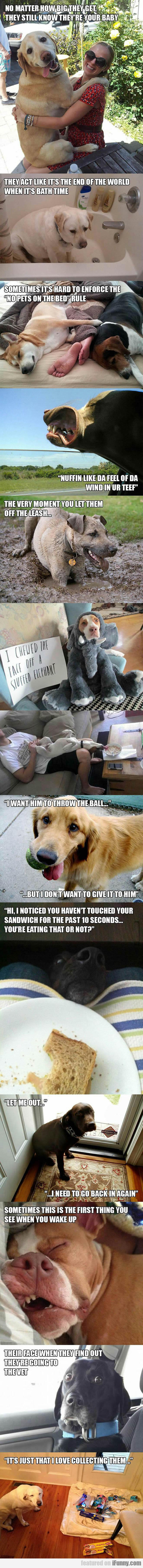 Dog Logic At Its Best