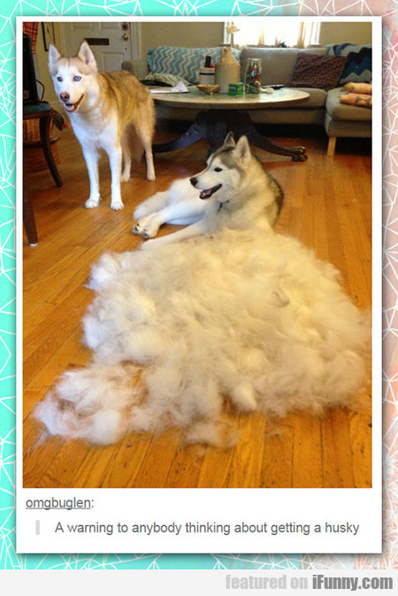 For Those People Who Want A Husky