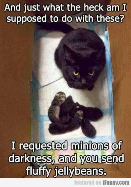 I Requested Minions