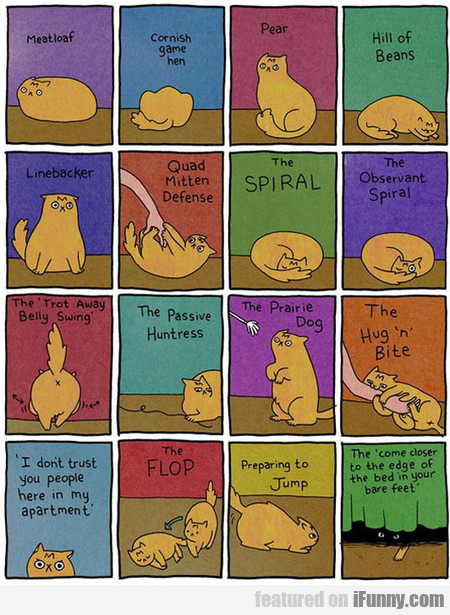 The Body Language Of A Cat