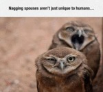 Nagging Spouses