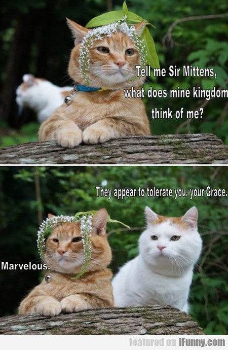 Sir Mittens, Please Tell Me
