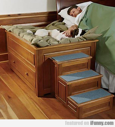 The Perfect Bed For Your Dog