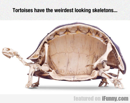 Tortoise Skeleton