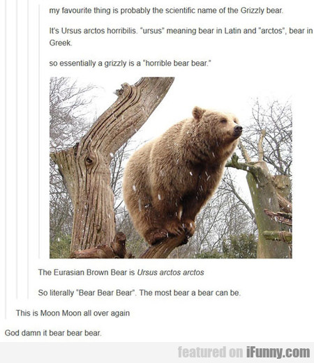 The Scientific Name Of The Bear