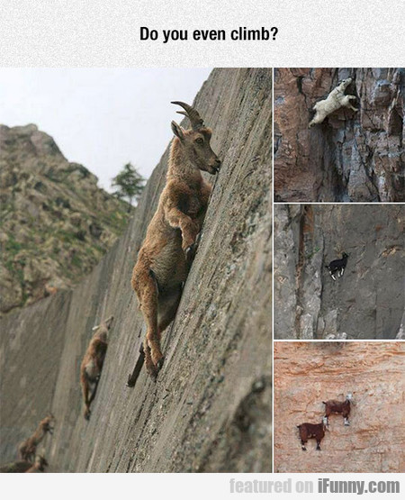 Goats Are Crazy
