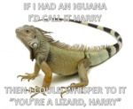 My Magical Iguana