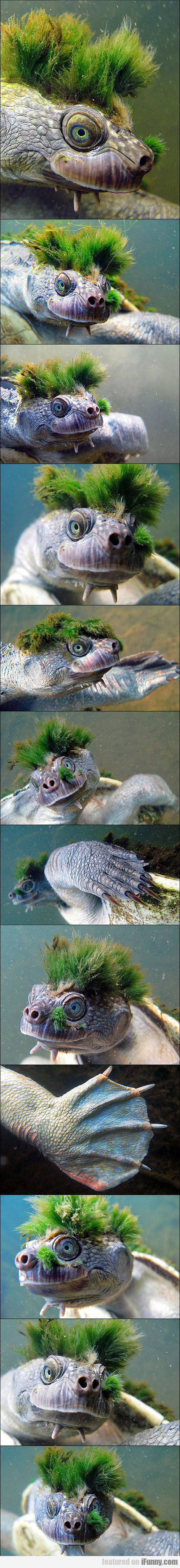 Moss Turtle, And You Thought You Had A Bad Hair Da