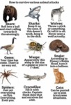Ways To Survive Animal Attacks