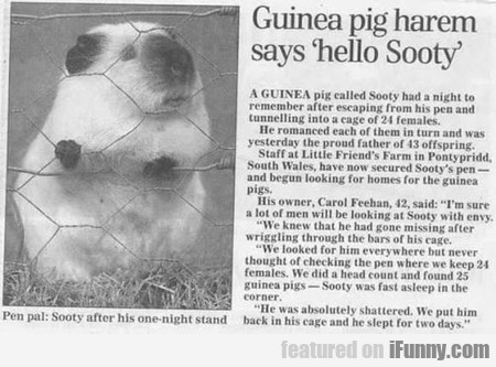 This Guinea Pig Is A Legend
