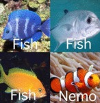 Whenever I Try To Name Fish Breeds