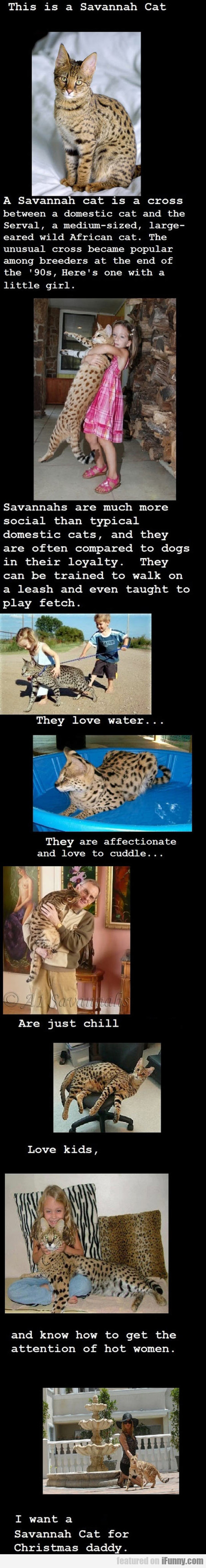 I Want A Savannah Cat Right Now