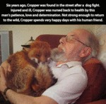 Fox And His Human Friend