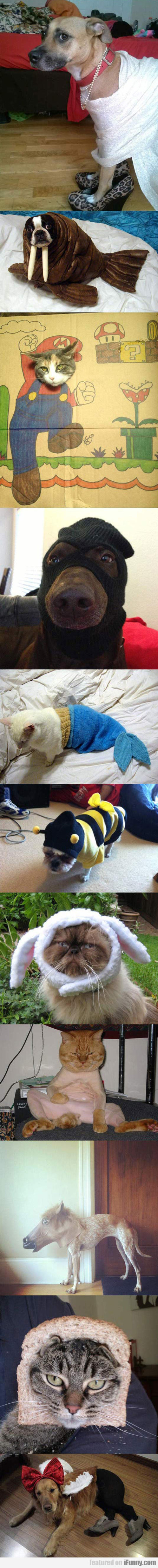 Pets That Probably Deserve An Apology