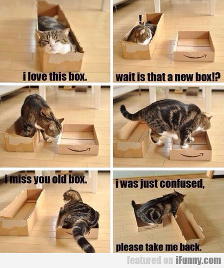 Pretty Much Sums Up All Cats