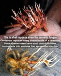 The Tarantula From Hell