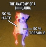The Real Anatomy Of A Chihuahua
