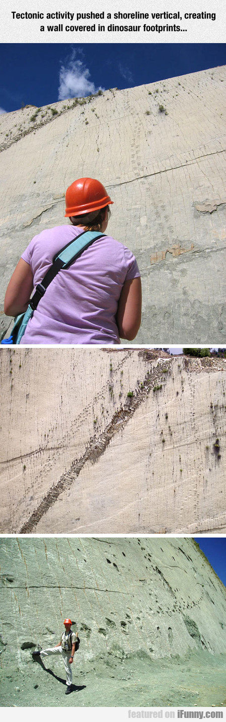 Wall Covered In Dinosaur Footprints