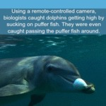 Using A Remote-controlled Camera Biologists...
