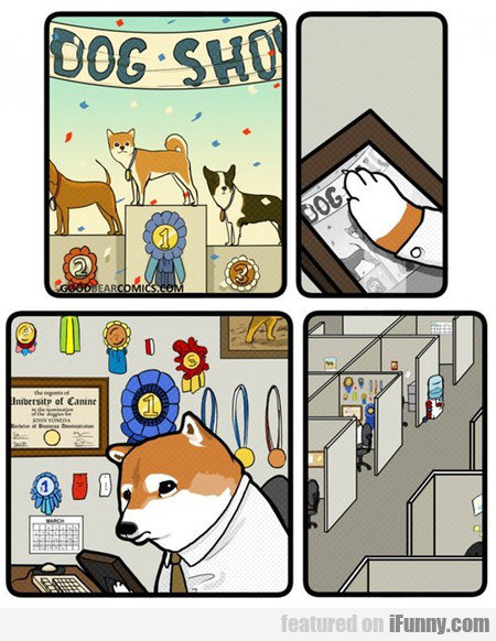 Doge As It Gets Old