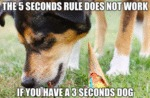 The 5 Seconds Rule Does Not Work If You Have...