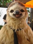 Most Photogenic Sloth In The World