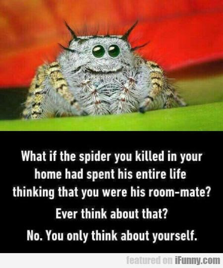 What If The Spider You Killed In Your Home Had...