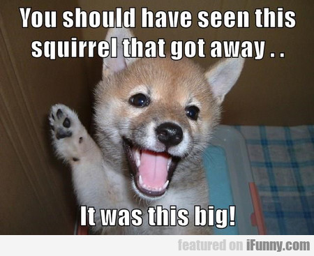 You Should Have Seen This Squirrel That Got Away..