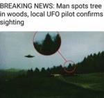 Breaking News - Man Spots Tree In Woods, Local...