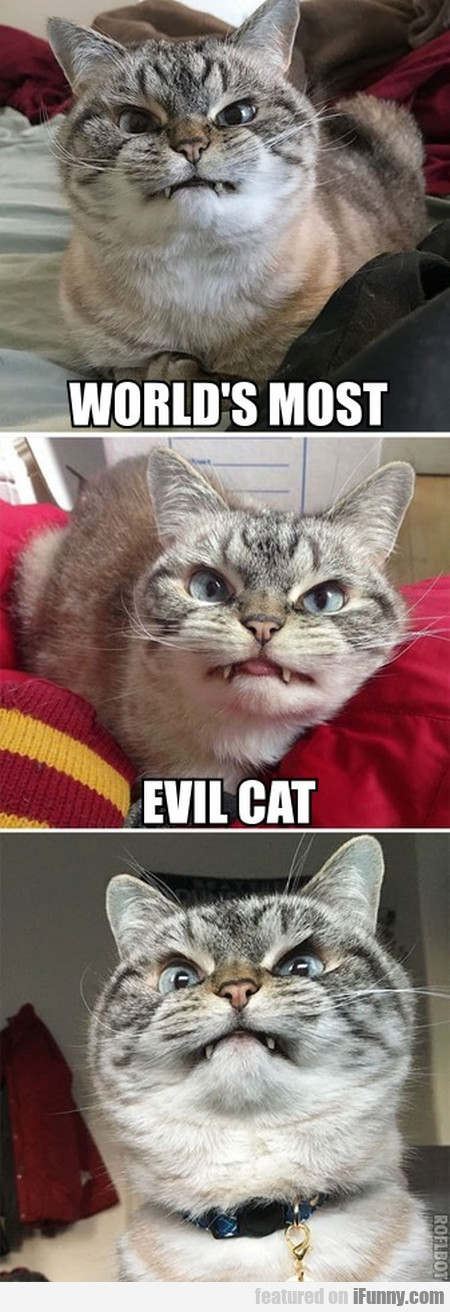 World's Most Evil Cat