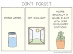 Don't Forget: Drink Water. Get Sunlight...