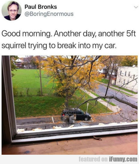 Good Morning. Another Day, Another 5ft Squirrel...