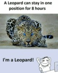 A Leopard Can Stay In One Position For 8 Hours