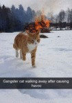 Gangster Cat Walking Away After Causing Havoc...
