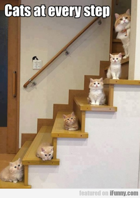 Cats At Every Step