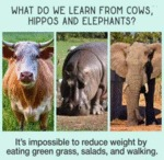 What Do We Learn From Cows Hippos And Elephants?